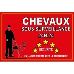 Chevaux sous surveillance 24h/24